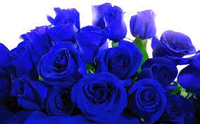 beautiful roses hd wallpapers rose hd wallpapers for desktop roses high resolutions hd wallpapers to desktop and laptop beautiful roses hd wallpapers