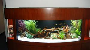 Funny Fish Tank Decorations Awesome Fish Tank Idea Cool Ideas 6741