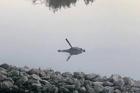 <b>Аллигатор</b> с большим ножом в голове был замечен в озере в ...