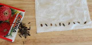 How To Germinate Flower Seeds Paper Towel How To Test Seeds For Germination Before Planting Todays Homeowner