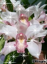 Resultado de imagen para imágenes de orquídeas gifs