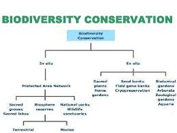 biodiversity conservation biodiversity conservation<br >e<br