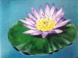 water lily painting by david clode