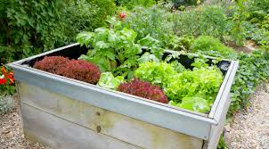 best veggies that grow in raised garden