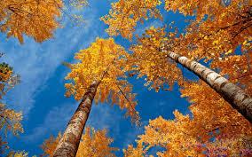 16++ Autumn Desktop Wallpaper Mac ...
