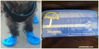 Jelly Wellies Rain Boots For Dogs Oz The Terrier