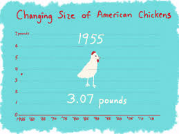 Growth Of A Chicken Chart Why Chickens Are Twice As Big Today As They Were 60 Years