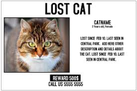 Lost Cat Flyer 790 Lost Animal Customizable Design Templates Postermywall