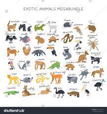Suchen Sie nach Exotic Animals Clipart Vector Illustrations  Set-Stockbildern in HD und Millionen weiteren lizenzfreien Stockfotos,  Illustrationen und Vektorgrafiken in der Shutterstock-Kollektion. Jeden Tag  werden Tausende neue, hochwertige Bilder ...