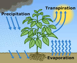 evapotranspiration   the water cycle  from usgs water science schoolevapotranspiration is the sum of evaporation from the land surface plus transpiration from plants  lt