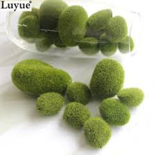 Decorative Moss Balls Moss Balls Plant NZ Buy New Moss Balls Plant Online from Best 24