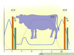 How To Tell When A Cow Or Heifer Is In Estrus 15 Steps