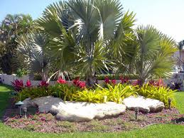 Small Picture south florida landscaping Google Search garden Pinterest