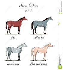 Set Of Horse Color Chart On White Equine Coat Colors With