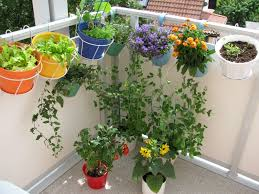 Small Picture Plants For Balcony In India Best Balcony Design Ideas Latest
