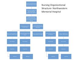 Organization Chart Of Hospital Ppt Www Bedowntowndaytona Com