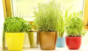 indoor herb garden learn how to grow