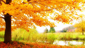 Fall Landscaping Garden Design Garden Design With Amazing Color For The Fall