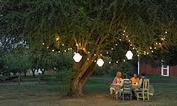 Christmas Lights In Backyard
