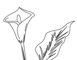 Coloriage L Arum Coloriage Fleur Arum Imprimer Elleadore