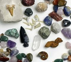 Image result for rock and fossil collection