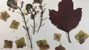Dried Flowers and Leaves In Minutes (Part 1)