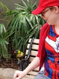 busch gardens ta bay 2736 photos