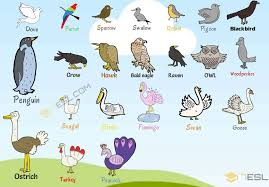 Birds Chart For Kindergarten Bird Names List Of Birds With Useful Birds Images 7 E S L