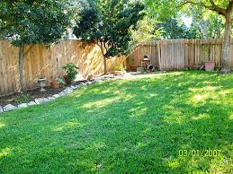 The 8 Best Perfectforprivacy Garden Trees  The MiddleSized Good Trees For Backyard