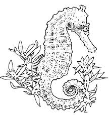Seahorses Coloring Pages - vidopedia.com | vidopedia.com
