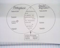 Cell Energy Flow Chart Photosynthesis And Cellular Respiration Answer Key Photosynthesis And Cellular Respiration Venn Diagram