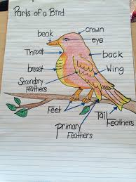 Parts Of A Bird Chart Classroom Charts Birds Information
