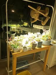 Succulent Grow Light Setup Growlight Setup For Succulents In Northfacing Apartment