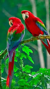 Parrots Paradise Htc One Wallpaper ...