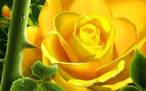 3D Rose Live Wallpaper Android Apps ...