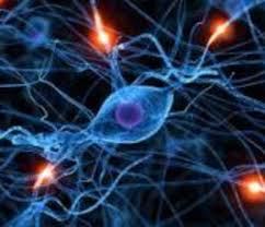 Neurotrophins in development and disease of the nervous system | Max Planck  Institute of Psychiatry