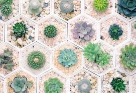 20 popular types of succulents ftd com