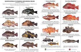 California Rockfish Chart Identification Of Common Groundfish Species Of Northern