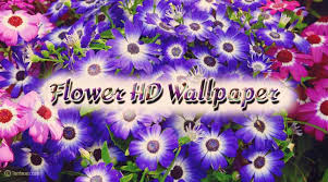 beautiful flowers images free