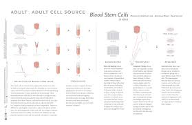 stem cells across curriculum high res infographics zip permissions