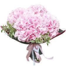 <b>Букет</b> из <b>5 розовых гортензий</b> - купить с доставкой по Петербургу ...
