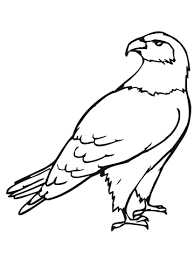 Small Picture Hawk Bird coloring page Free Printable Coloring Pages