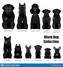 Dog Breed Chart With Names Collection Of Black Dog Stock Vector Illustration Of