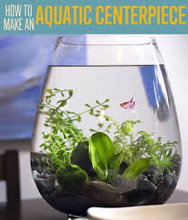 small screenshot 1 office fish. best 25 small fish tanks ideas on pinterest aquatic plants tank terrarium and betta screenshot 1 office
