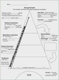food web pyramid food web worksheet middle school ecological pyramid worksheet answers