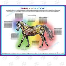 Animal Chakra Chart Animal Chakra Charts Marla Steele Pet Psychic