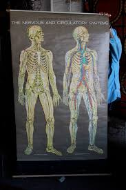 American Frohse Anatomical Charts Key 3fortyseven Merchandise