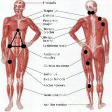 Fibromyalgia Tender Points Chart Fibromyalgia Trigger Points Effectively Treated With A