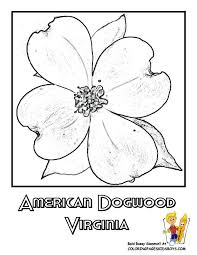 Small Picture virginia state flower coloring page american dogwood american
