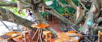 Tree House ReviewTreehouse Monteverde Costa Rica
